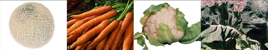 carroti seeds - Weatherford,  TX  - Dillard Feed & Seed Inc. - 817-596-8271