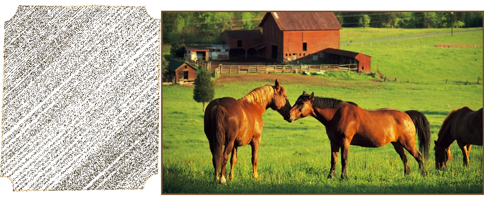 Horse Feed | Weatherford, TX | Dillard Feed & Seed Inc. | 817-596-8271