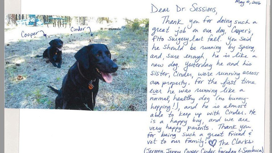 Dr. Sessions, Cinder and Cooper the labs, Client Review, Testimonial, FHO surgery review, Happy review