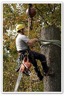 Tree Removal - Saint Charles, IL - Shamokin Tree Care