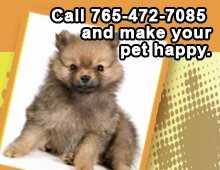 Pet Grooming - Peru, IN - Pat's Place - Call 765-472-7085 and make your pet happy.