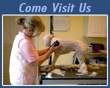 Pet Grooming Salon - Tupelo, MS - Amy's Posh Pups Grooming Salon