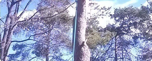 Impressive Trimming - Caldwell, ID - Tree Trimming