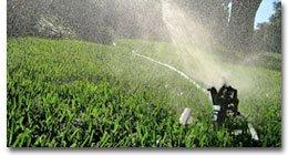 Lawn Service   San Jose, CA   D.A.V. Gardening Service   Sprinkler