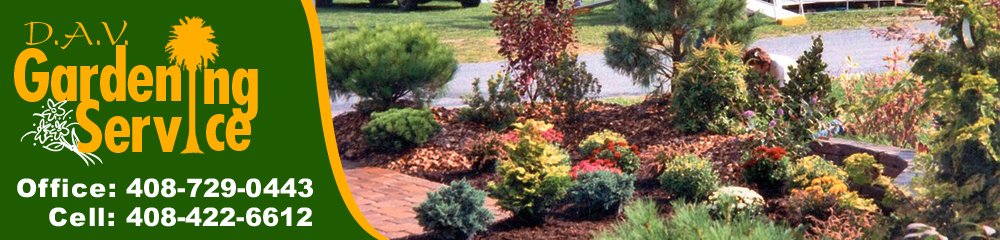 Lawn Care And Landscaping San Jose, CA U2013 D.A.V. Gardening Service