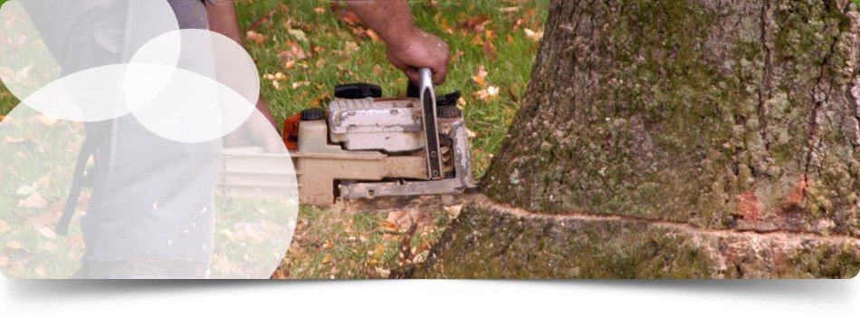Tree Removal | Oil City, PA | Kerna Landscaping  | 814-673-9275