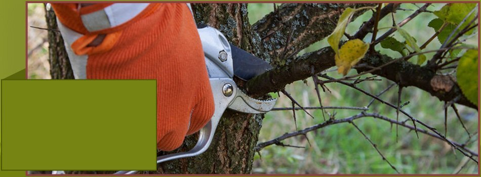 Photo Gallery | Oklahoma City, OK | James Luker Tree Service | 405-630-5893