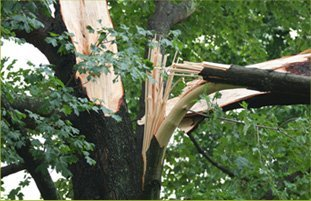 Tree Service | Oklahoma City, OK | James Luker Tree Service | 405-630-5893