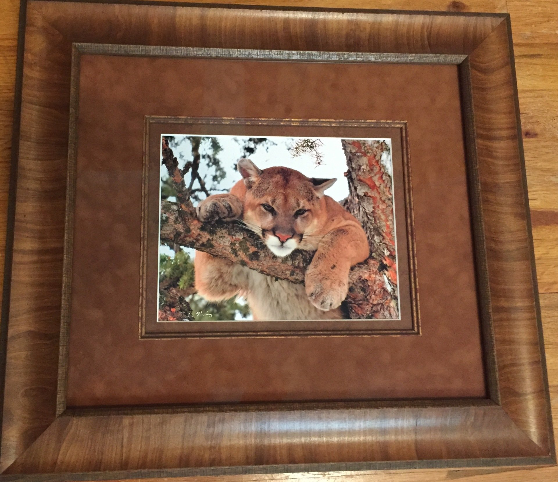 Cape House Gallery Custom Picture Framing Home D 233 Cor