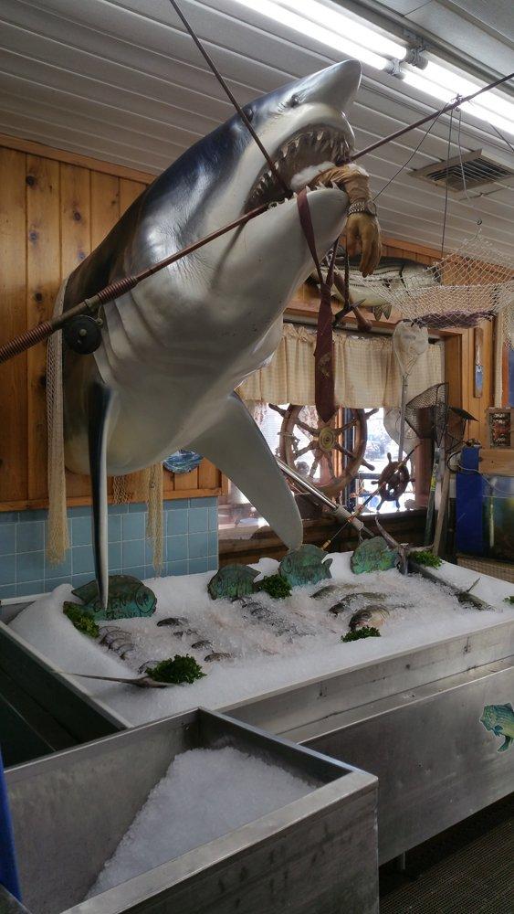Shark Display