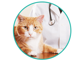Quality Veterinary Service