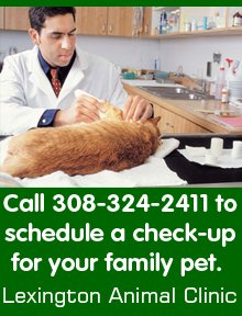 Veterinarian - Lexington, NE  - Lexington Animal Clinic