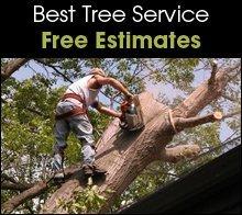 Arborist - Billings, MT - Best Tree Service - Tree Cutting