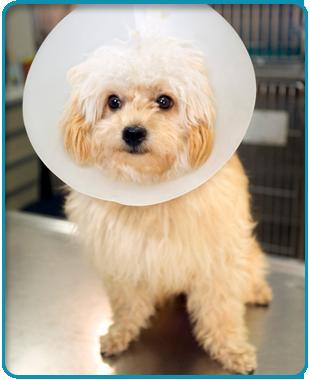 Pet boarding | Flora, MS | Flora Animal Hospital | 601-879-3222