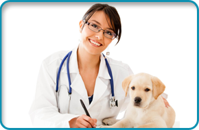 Pet dentistry | Flora, MS | Flora Animal Hospital | 601-879-3222