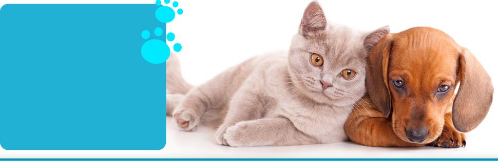Annual pet wellness exams | Flora, MS | Flora Animal Hospital | 601-879-3222