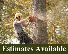 Tree Trimming Service - Moulton, AL - Peebles' Tree Service