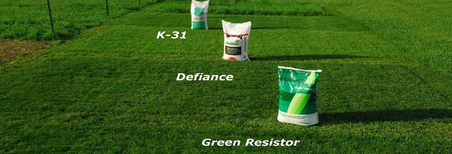 grass and lawn fertilizer