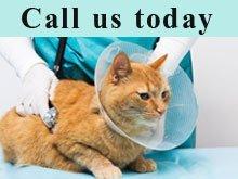 Veterinarian - Amarillo, TX - Johnson Animal Hospital