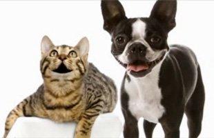 Pet Boarding  | Missouri City, TX | Country Club Groom Inn | 832-539-4785