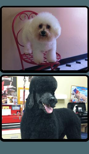 Dog grooming, pet grooming, self-serve dog bathing, cat grooming - New Baltimore, MI - Love My Pet