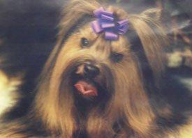 Dog Grooming - Cedar Park, TX - Daycare Grooming