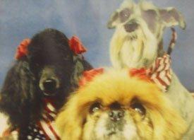 Cedar Park, TX - Daycare Grooming - Dog Grooming