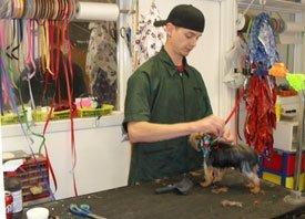 Daycare Grooming - Cedar Park, TX - Dog Grooming
