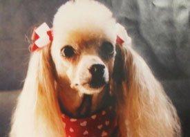 Daycare Grooming - Dog Grooming - Cedar Park, TX