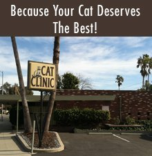 Veterinary Hospital - Pasadena, CA - Cat Clinic