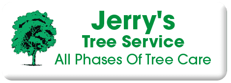Tree Service | Petaluma, CA | Jerry's Tree Service | 707-778-8264