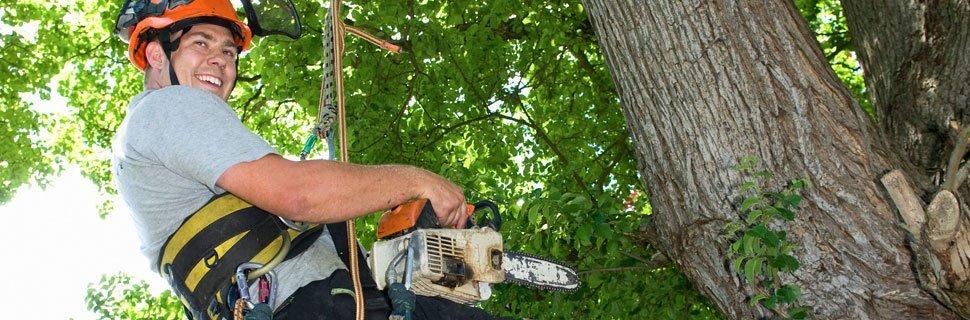 Stump Grinding | Petaluma, CA | Jerry's Tree Service | 707-778-8264