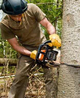 Branch Removal | Petaluma, CA | Jerry's Tree Service | 707-778-8264