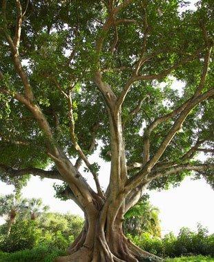 Landscaping | Petaluma, CA | Jerry's Tree Service | 707-778-8264