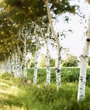 Tree Maintenance | Petaluma, CA | Jerry's Tree Service | 707-778-8264