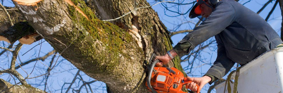 Stump Removal | Petaluma, CA | Jerry's Tree Service | 707-778-8264