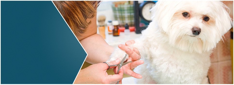 Grooming Services | Madison, WI | TT Grooming, LLC | 608-256-1443