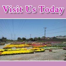 Garden - Fountain Valley, CA - Maehara Nursery