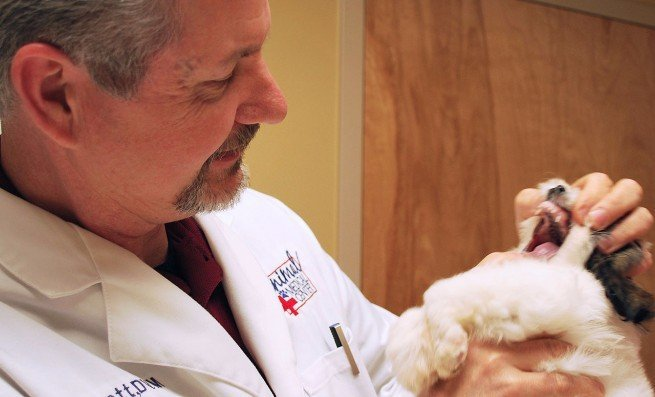 Medical Care for Your Pets