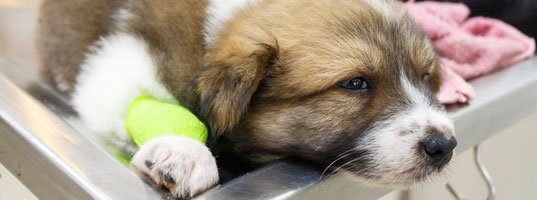 Cruciate Care for Pets