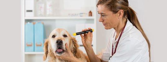 Premier Pet Surgical Care