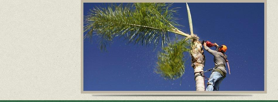 Tree Maintenance | Port St. Lucie, FL | East Coast Stump Grinding | 772-220-8201