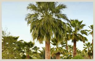 Tree Service | Port St. Lucie, FL | East Coast Stump Grinding | 772-220-8201