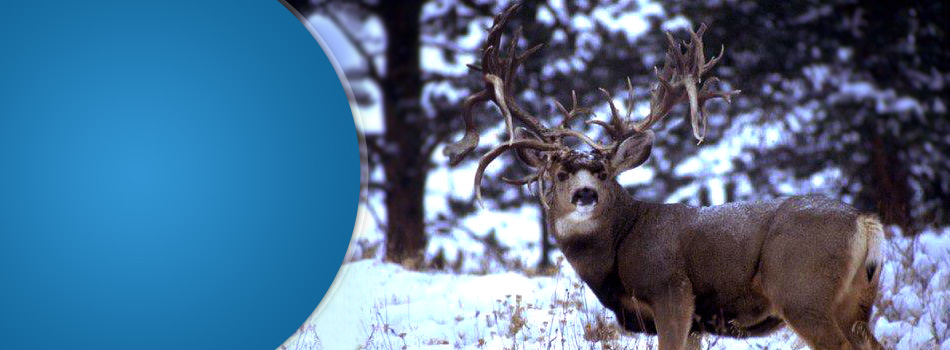 Wild Game Processing | Boise, ID | Meats Royale | 208-375-1341