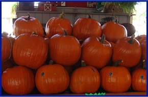 Fall | Weatherford, TX | Weatherford Farmers Market | 817-246-7525