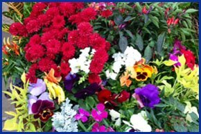 Spring | Weatherford, TX | Weatherford Farmers Market | 817-246-7525