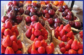 Different kinds of fruits