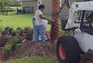 Tree and Lawn Installation
