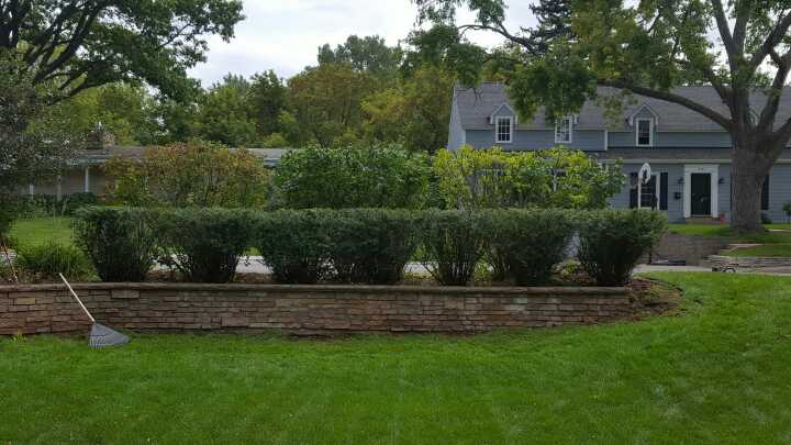 Bush pruning services