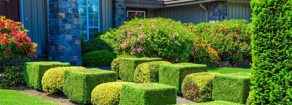 House with nice trimmed bushes